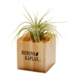 Promotional Plants-JK-1505