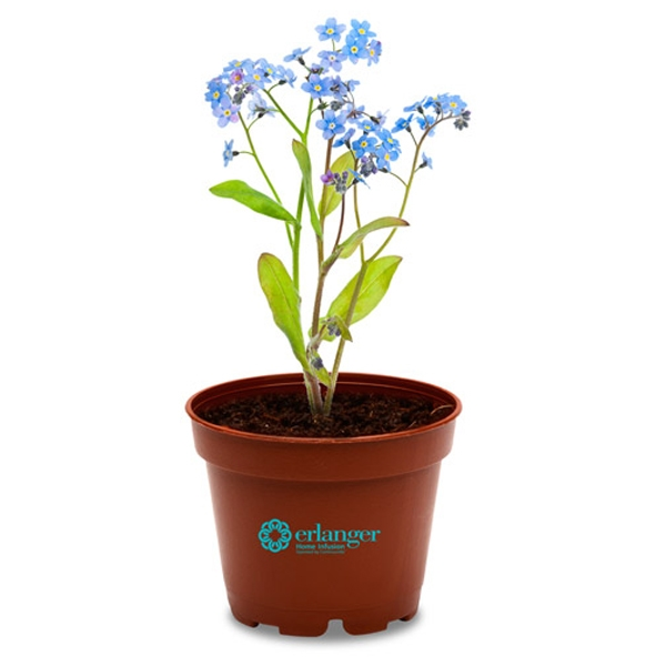 Sprout Tyme - Planter