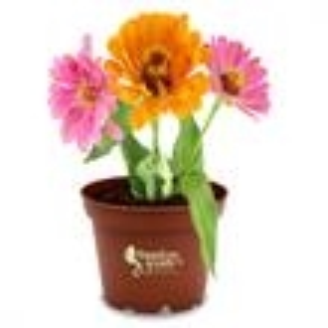 Promotional Garden Accessories-410620