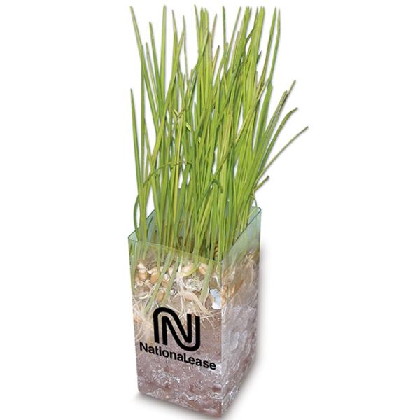 Sprout Tyme - Wheatgrass